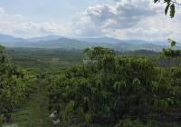 Lô đất hẻm Đinh Công Tráng, Xã Đại Lào, thành phố Bảo Lộc