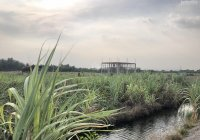 Mặt tiền sông lớn Phú Đông, gần cầu Cát Lái, giá 1,35 triệu/m2