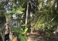 Chính chủ cần bán đất mặt tiền Lộ Nhú Nhuận - Nhơn Thạnh thành phố Bến Tre