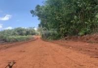 Chủ cần bán gấp 1,4ha vườn cây ăn trái, xã Xuân Tâm, Xuân Lộc, đất đỏ đẹp, trồng cây ăn trái