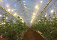 Chính chủ cần bán trang trại 8 hecta đất tại khu NNCNC gần Mũi Né Bình Thuận