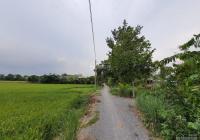 Bán vườn xoài 5.800m2 (32x182m, đất lúa) đường đá xe ba gác, Xã Mỹ Thọ, H. Cao Lãnh, ĐT