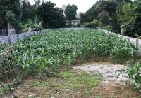 Cần tiền cho con đi nước ngoài gia đình bán lô đất 660m2 TC 100m2 mặt đường trục chính xã Cư Yên