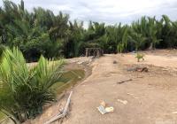 Bán gấp lô đất xã Bình Khánh, H. Cần Giờ: 500m2, giá 890 triệu