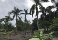 Bán nhà vườn có thổ cư 43*150m2 ở Nguyễn Văn Khạ, giá 2.8 tr/m2