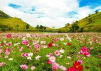 Bán đất nghỉ dưỡng gần khu du lịch thác Dambri chỉ 600tr/100m2, full thổ sổ sẵn