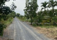 Cần bán đất nông nghiệp mặt tiền Kênh 10, xã Lê Minh Xuân