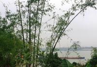 Chính chủ nhờ e bán gấp 2 lô 48m2 tại thôn Yên Hà, Xã Hải Bối. LH 0982192863