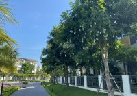 Cho thuê các nhà biệt thự đẹp tại khu đô thị Vinhomes Thăng Long, Hoài Đức, Hà Nội