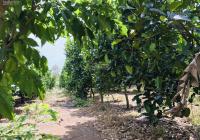 Bán vườn mít, mặt tiền đường dân sinh 7m hiện hữu, quy hoạch mở rộng 16 mét, chính chủ, 0917397585