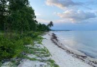 1,2 Ha mặt biển Cây Sao giá tốt nhất khu vực