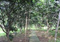 Bán đất vườn tại Củ Chi có sẵn vườn bưởi giá chỉ hơn 800tr sổ hồng riêng có sẵn bao sang tên