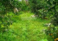 Bán đất vườn Củ Chi giá 950tr, đất thổ cư 100%
