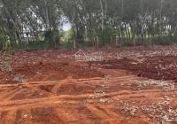 Chính chủ bán đất sào trồng cây lâu năm, Bà Rịa Vũng Tàu, hẻm xe hơi, DT: 6.500m2, LH: 0984557989