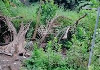 Bán đất vườn trọn sổ xã Qui Đức, diện tích 15x15m (225m2) giá trả trước 950tr