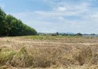 Cần bán đất mặt tiền đường Nguyễn Huệ - Đất Đỏ - Bà Rịa VT, DT 998m2 sẵn 200m2 TC