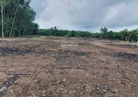 Bán đất vườn Châu Pha, khu dân cư đông đúc, giá 1,5tr/m2 sổ sang tay