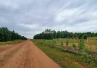Đất nông nghiệp CLN Hòa Thắng dt: 3995 m2. Cách đường liên huyện 600m cắt ngang kênh nước