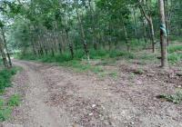 Cần bán  hơn 1.100m2, Ấp 5, xã Phước Bình, huyện Long Thành - Tỉnh Đồng Nai