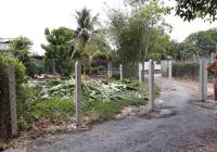 Bán lô đất đường trải đá Xã Phước Thạnh, quy hoạch KDC dân cư đông kín