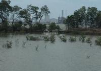 Chính chủ bán đất Gò Găng, xã Long Sơn, TP Vũng Tàu. Giá chỉ 200.000đ/m2