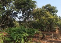 Chính chủ cần tiền bán gấp lô đất đẹp sổ riêng thổ cư 100%, gần chợ Phú Cường, Định Quán