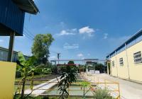 Chủ cần tiền hạ giá bán gấp nhà xưởng MT QL13 Bàu Bàng, Bình Dương