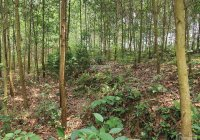 Bán gấp 550m2 đất thổ cư bám mặt đường giá rẻ tại Kim Bôi, Hòa Bình