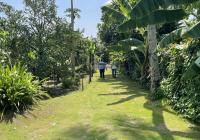 Cần bán nhà vườn tại Thuận An, Bình Dương