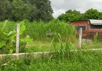 Đất trồng cây lâu năm đầu tư 849m2, 2 tỷ 1, hẻm đường Bàu Tre, Tân An Hội, Củ Chi. LH 0901199686
