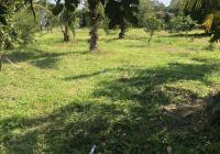 Bán đất vườn trái cây diện tích 2100m2 xã Phước Hiệp, Củ Chi, TPHCM