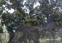Bán nhà vườn đường Lò Bún, Khóm Thạnh An, Phường Mỹ Thới, TP. Long Xuyên