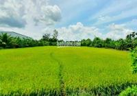 Đất công mặt tiền Quốc Lộ 61C đoạn 2.000 Châu Thành A
