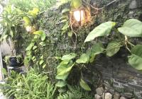 Kẹt tiền bán gấp, nhà đẹp MT 15m, P.15, quận 8. Giá rẻ nhất khu vực, LH Ms. Thanh Thảo 0909.672.657
