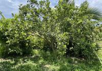 Đất vườn chính chủ cần tiền bán gấp