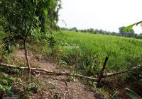 Bán lô đất 2 mặt tiền Rạch lớn, gần sông Sài Gòn, DT 2553.1m2, thổ 300m2, chỉ 2.1 tr/m2
