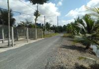 9300m2 vườn dừa mã lai và bưởi da xanh rất đẹp, đang sai trái, mặt tiền lộ nhựa