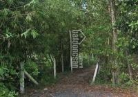 Nhà vườn sát đường Tỉnh Lộ 15, xã Phú Hoà Đông, Củ Chi, DT: 25x20m, bán nhanh thương lượng mạnh
