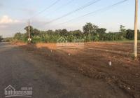 Bán gấp miếng đất nông nghiệp 500m2 có sổ tại Sông Xoài Phú Mỹ