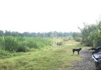 Đất DT 8.2mx51m bán rẻ Phú Hòa Đông - Củ Chi ngay Tỉnh lộ 15, sổ nở hậu 26m, SHR bao sang tên