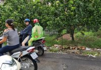 Hàng xóm bán 66m2 trục chính Giao Tất, Kim Sơn mặt tiền 4,8m
