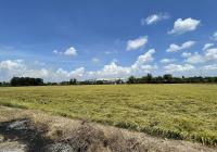 Bán 9.000m2 đất chính chủ có sổ hồng mặt tiền 65m Tỉnh Lộ 852B - Giá rẻ nhất khu vực, chỉ 7,5 tr/m2