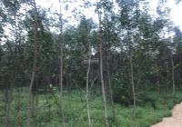 Cần bán 24m đất hẻm Trưng Trắc - Tân An - La Gi lợi nhuận tốt