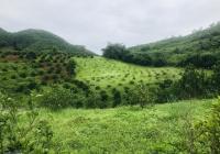 Bán 2,3 ha đất có 800m2 ONT ở Kim Bôi Hoà Bình. Có ao, giá hợp lý, giao thông thuận tiện
