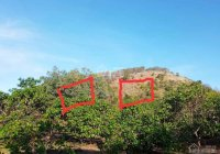 Bán đất 20x50m = 1.000m2 đất Phước Tân. Giá 320 triệu