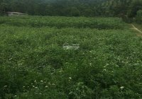 Chủ cần tiền bán nhanh 2385m2 full thổ cư tại Bình Sơn, Kim Bôi, Hòa Bình rẻ đẹp