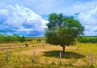 10,000m2 đất trồng cây lâu năm xã Hòa Thắng, có đường trên sổ, cách DT716 600m, giá 130k/m2