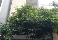 Cho thuê nhà hẻm xe hơi 6m đường Thích Quảng Đức, Phú Nhuận, 1 lửng, 2 lầu, sân thượng, 0982306369