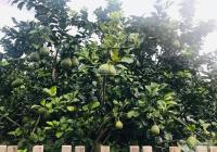 Bán đất vườn bưởi xinh xinh 1035m2 huyện Phú Tân Định Quán Đồng Nai