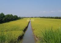 Cần bán gấp đất nông nghiệp 13.000m2, mặt tiền đường nhựa 5m